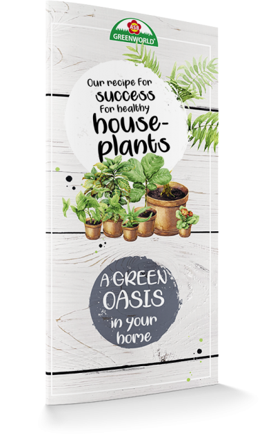 Our recipe for success for healthy houseplants